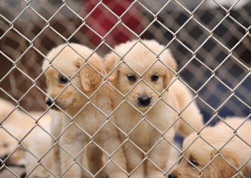 kafeste yavru köpekler