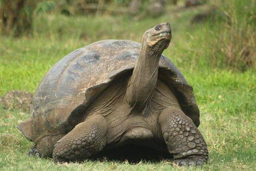 Dünyanın En Uzun Ömürlü Hayvanları