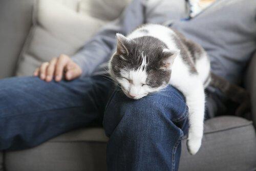 kucakta uyuyan kedi
