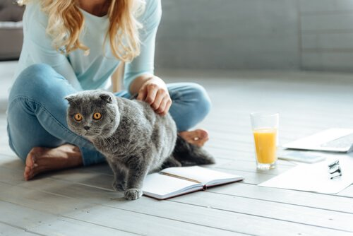 Kedilerle Yaşamak İçin 6 Altın Kural