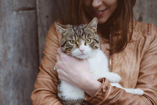 Kedilerde Toksoplazma Hastalığı