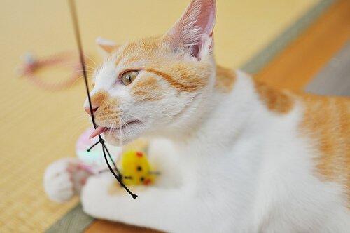 Kedinizle Yapabileceğiniz Egzersizler
