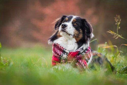 Kışın Köpekler: Bakım ve Dikkate Alınacak Hususlar