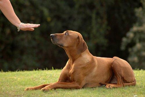 yat komutu alan köpek