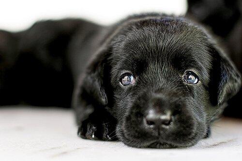Bir Köpek Evlat Edinmek ile İlgili Bilmeniz Gereken Her Şey