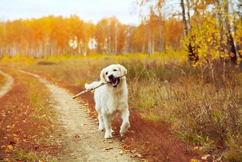köpek egzersizleri