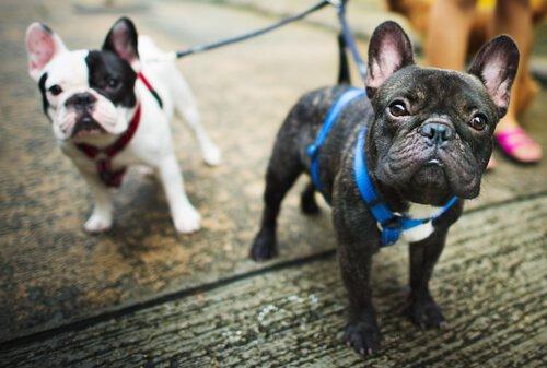 Köpek Gezdirmek İçin En Uygun Zaman Hangisidir?