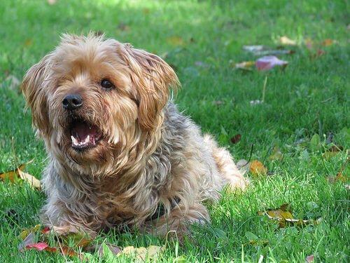 Köpeklerin Havlama Nedenleri ve Anlamları