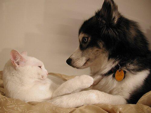 Köpekler ve Kediler İçin Doğum Kontrolü Yöntemleri