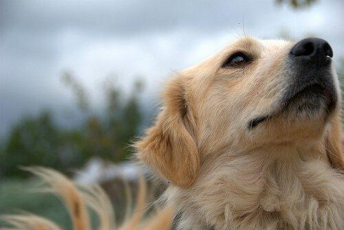 Köpeğinizi Tararken Nelere Dikkat Etmelisiniz?
