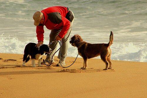 Köpeğinizle Koşuya Çıkarken Kullanabileceğiniz 10 Tavsiye