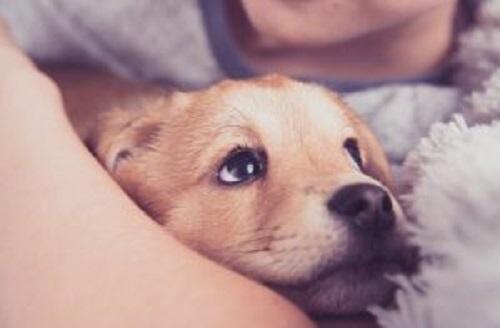 yavru köpek evlat edinmek