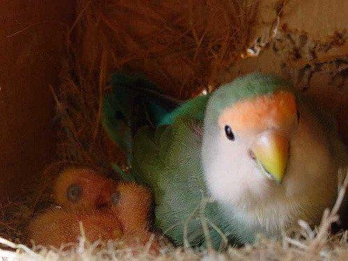 anne kuş ve yavruları