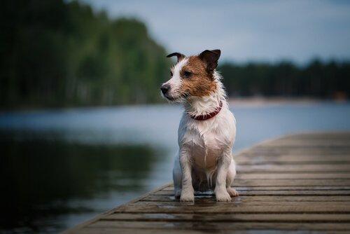 İspanya'nın En Ünlü Köpeği Pancho'yla Tanışın