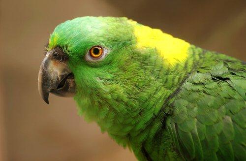 Papağanlarda Depresyon: Nedenleri, Belirtileri ve Tedavisi