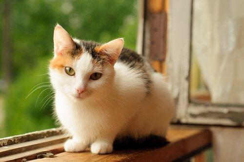 kedilere karşı alerji