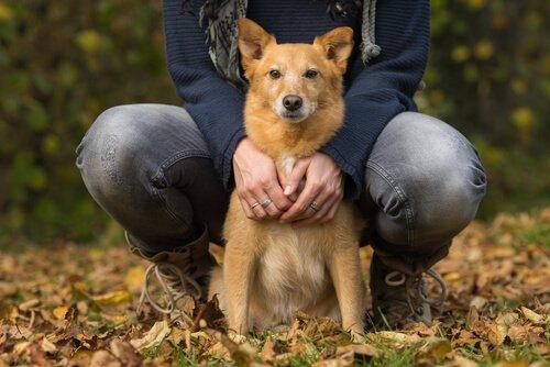 Köpeklerde Konjestif Kalp Yetmezliği
