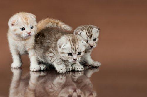 üç yavru kedi