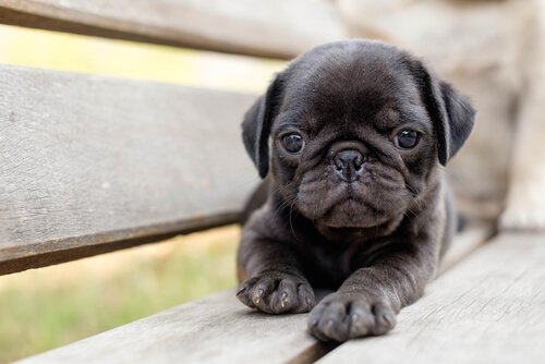 bankta yatan yavru köpek