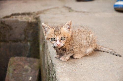 yavru sokak kedisi
