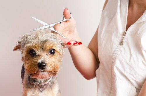 Köpekler İçin Bakım ve Tıraş Olma İpuçları
