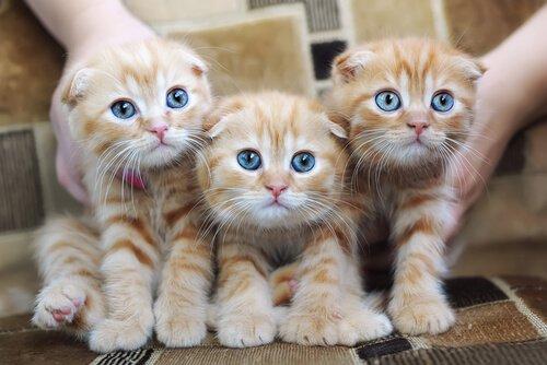 Kedi Alerjisi: Sebepleri, Belirtileri ve Önlemleri