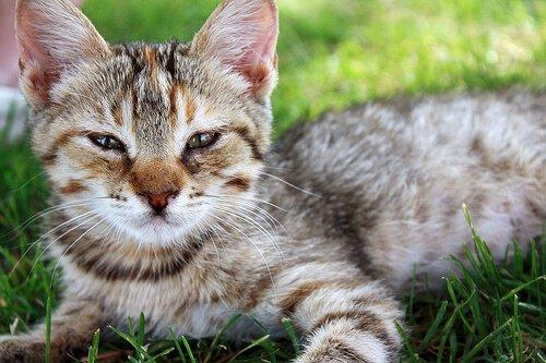 Köpekler Kedilerden Daha Mı Akıllı?