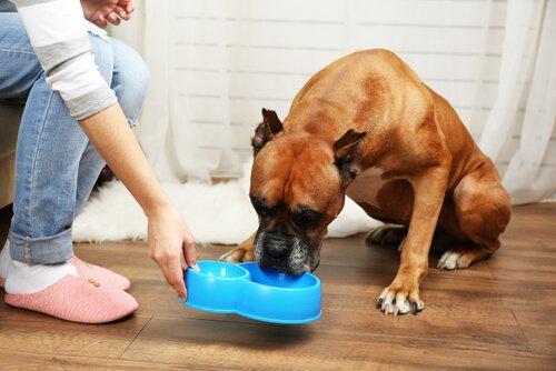 yaşlı köpeklerin beslenme düzeni
