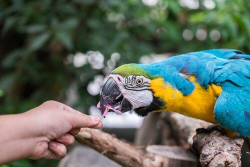 papağanlar için sebzeler