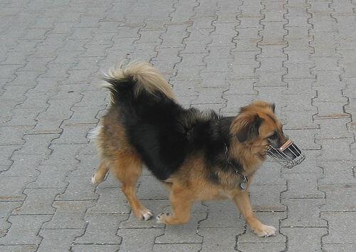 köpek ağızlığı