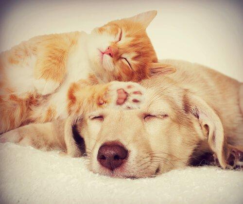 birlikte yaşayamayan hayvanlar