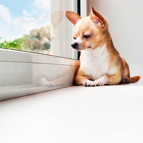 Köpeğini Evde Bırakanlar İçin Bazı İpuçları