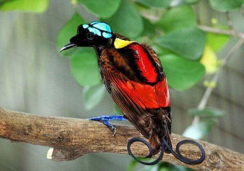 En Etkileyici 6 Kuş
