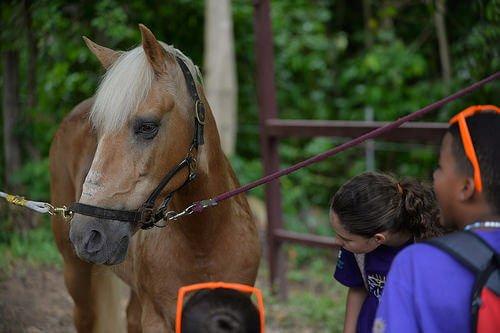hayvanları tedavi için kullanmak