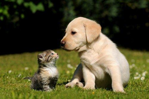 Birlikte Yaşayamayan Hayvanlar Hangileridir?