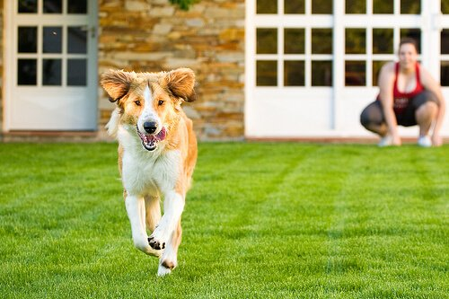 Köpeğinizin Evden Kaçmasını Nasıl Önlersiniz?