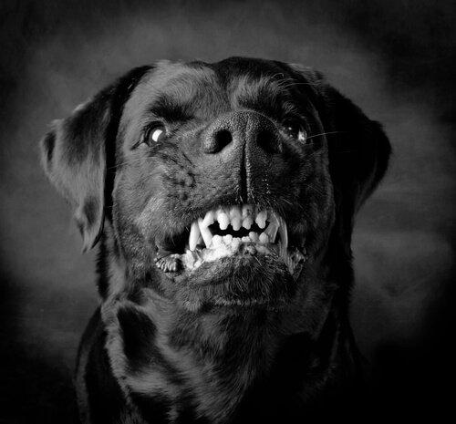 Köpekler Neden Saldırganlaşır?
