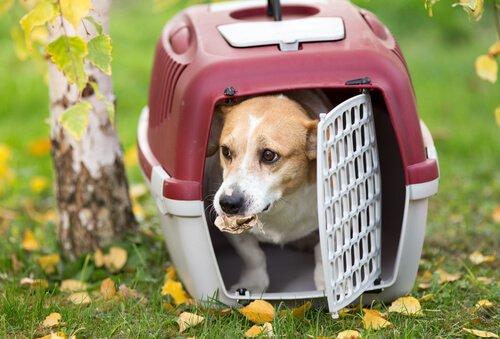 köpeği taşıma çantasına alıştırmak