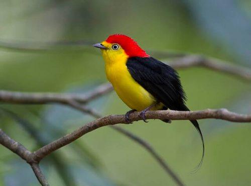 dünyanın en güzel kuşları
