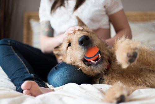 ağzında top olan köpek