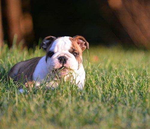 çimlerde oturan köpek