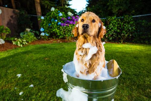 köpeği bahçede yıkamak