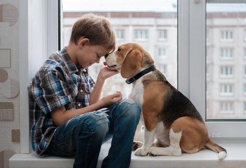 Beagle Cinsi Köpekler ile İlgili İlginç Bilgiler