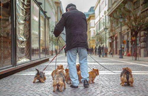 köpek gezdiren yaşlı adam