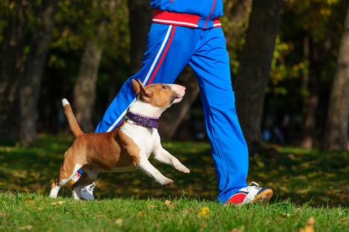 köpekleri sakinleştirmek için egzersiz