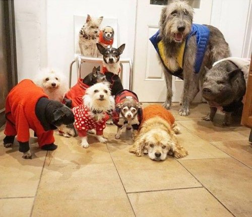 Evlat Edinmek: 10 Köpeği Sahiplenen Adam