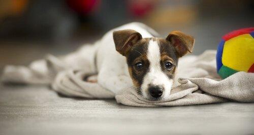 Köpeğinizin Uyarma Şekli Hakkında Bilgi Edinin!