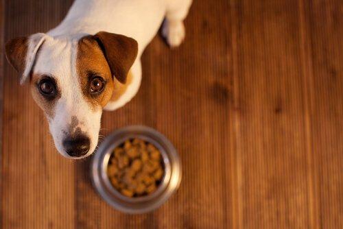Sindirim Sistemi Problemi Yaşayan Köpekler