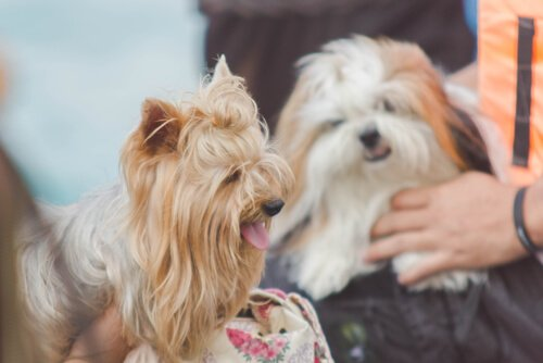 Köpeğinizle Nasıl Konuşmalısınız?