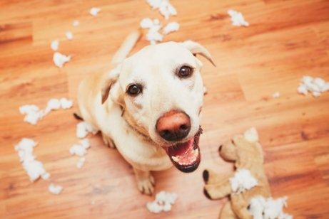 köpek ve parçalanmış oyuncak